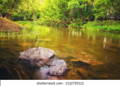 Slow water flowing through forest