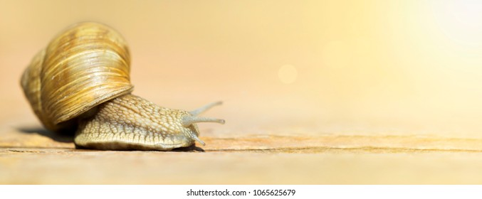 Slow web concept - banner of a cute snail with blank, copy space