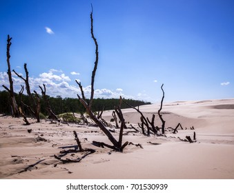 SLOWINSKI NATIONAL PARK,POLAND - August 26, 2017. Landscape of Slowinski National Park, consisting of moving dunes and old dried trees is considered to be one of the most beautiful sites in Poland.