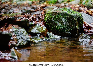 Slowly flowing water between stones with brown leaves and moss