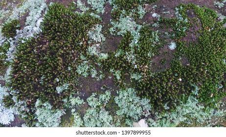 Sludge fungus green nature stone