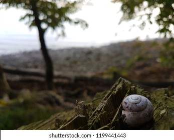 slug on a tree stump in front of a lake in the morning