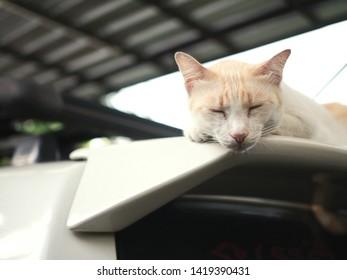 The sluggish cat sleeps, ignoring anything on the roof of the car.