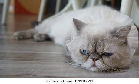 Sluggishness of the sluggish cat