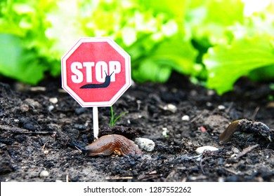 slugs ahead a slug-stop-sign