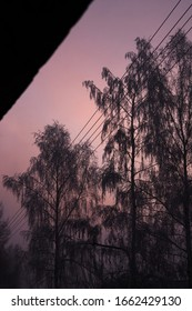 Růžový západ slunce, Background photo of pink sunset and trees and  power line
