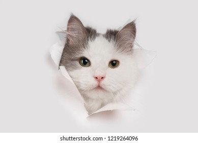 sly cat tore a white sheet of paper