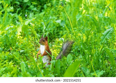 Sly looking squirrel in the green grass