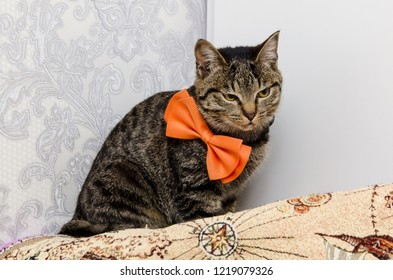 sly tabby cat with a bow around his neck