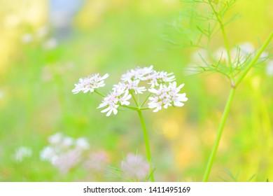 Smail flower, Beauty, Naturel beauty.