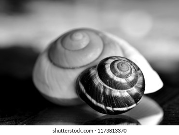 Smail shells - black and white