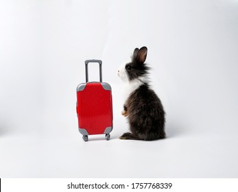 A small adorable bunny or rabbit standing next to red luggage. A concept for holidays or vacation at the beach. A concept for commercial advertising, business, and Easter holidays.