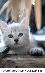 Small adorable kitten with blue eyes outdoor