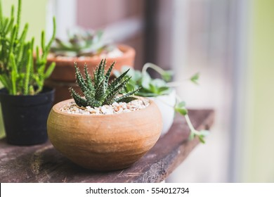 small aloe vera plant with cactus on lath