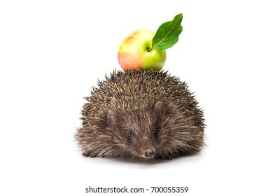 small animal hedgehog with green apple isolated on white background