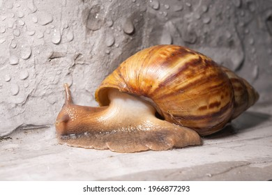 Small animal is snail or gastropod it life asia