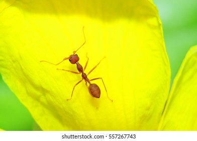 small ant at yellow flower