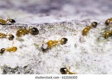 Small ants working on floor