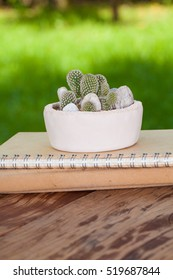 A small arranging cactus pot put on a book pile on the wood table in the garden