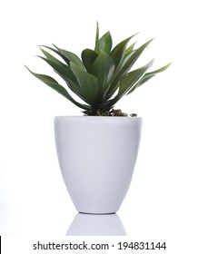 Small Artificial Plant on White background