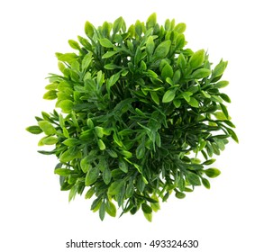 Small artificial tree in a pot isolated in white background. Concept image for interior design and decoration of home and office., top view