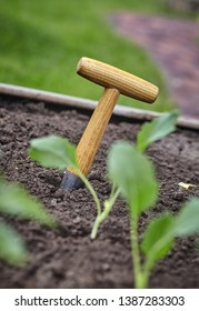 Small augur with wooden handle in fertile earth outdoors in the garden with young nursery seedlings for transplanting in spring in a selective focus view