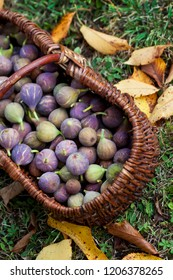 Small Autumn figs in a wicker basket