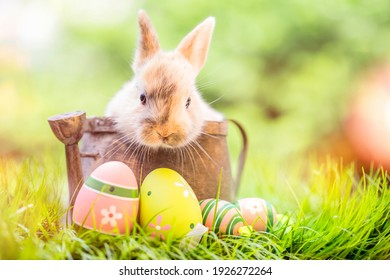 Small ,baby rabbit in easter basket with fluffy fur and easter eggs in the fresh,green spring landscape. Ideal as an easter card or greeting card or wallpaper.