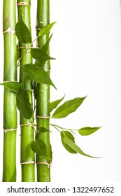 small bamboo sprout on the white background