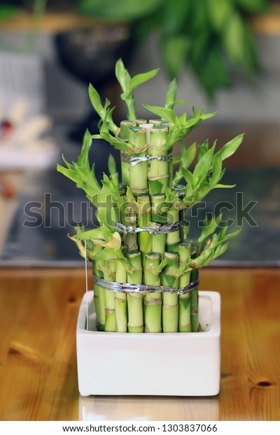 Small Bamboo Tree Used Home Decoration Stock Photo Edit Now