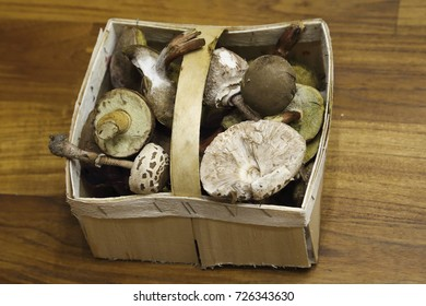 Small basket full of fresh mushrooms