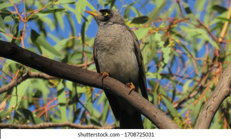 A small but beautiful bird known as