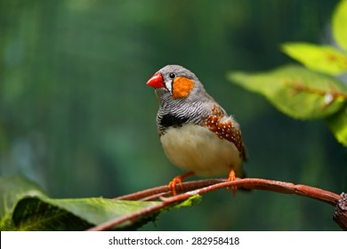 Small beautiful birds of the African savanna