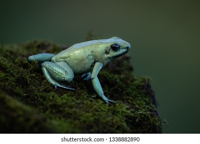 Small and beautiful frog sitting on a rock covered with moss. Amazing green colors. Pure natural scene. Fragile animal. Precious amphibian.