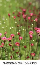 Small beauty flowers.