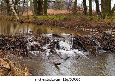Small beaver dam