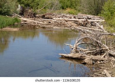 A Small Beaver Damn Near Lake Tahoe, California