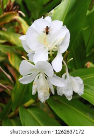 Small bee sitting on a beautiful white flower in El Yunque Rainforest Puerto Rico
