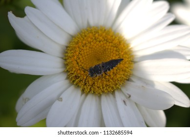 Small bee sitting on the stamen of a white and yellow flower with part sunny and part shady