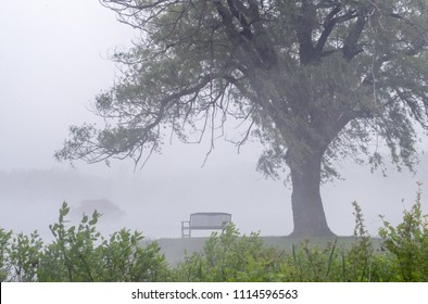a small bench sits beneath a majestic weeping willow tree, all shrouded in fog