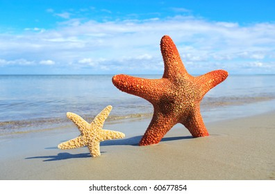 Small and big starfishes on the beach.