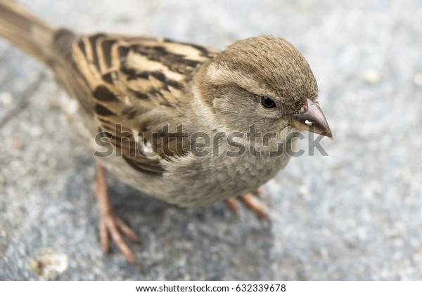 The small bird
