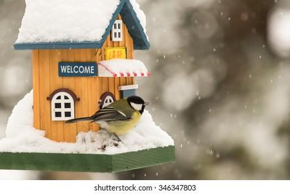 Small bird by a feeding house