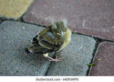 A small bird fell out of its nest, a bird