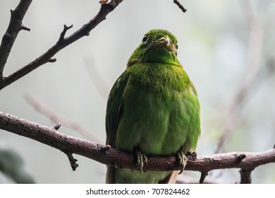 Small bird with green feathers on branch in forest