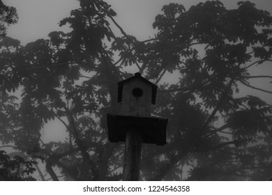 a small bird house in the gloom
