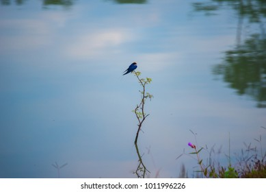 Small bird on wood stick in water lake with reflection on water