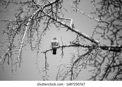 A small bird perch on twigs.