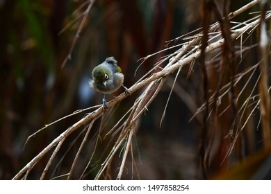Small Bird sitting on a Branch