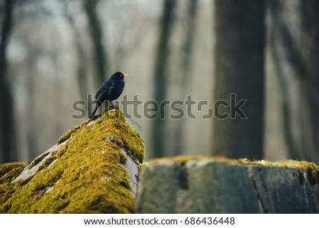 Small Bird Sitting On Mossy Granite Stock Photo (Edit Now